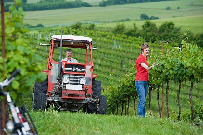 Maria und Viktor Girsch bei der Weingartenarbeit