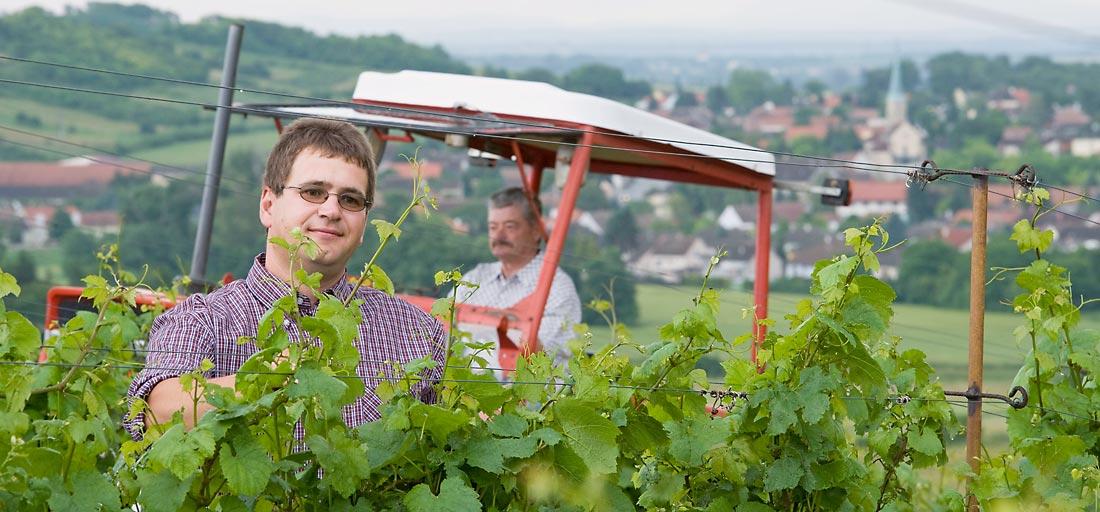 Roman und Viktor Girsch bei der Weingartenarbeit