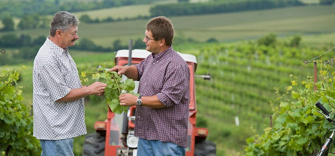 Viktor und Roman Girsch im Weingarten